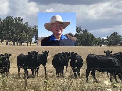 David Strelitz with Brooksby bred Angus heifers