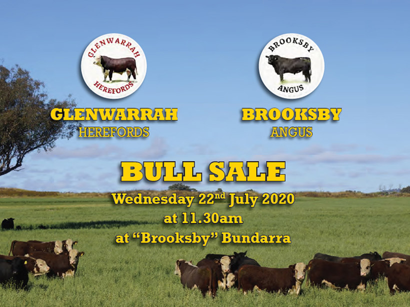 Glenwarrah Hereford & Brooksby Angus 2020 sale catalogue